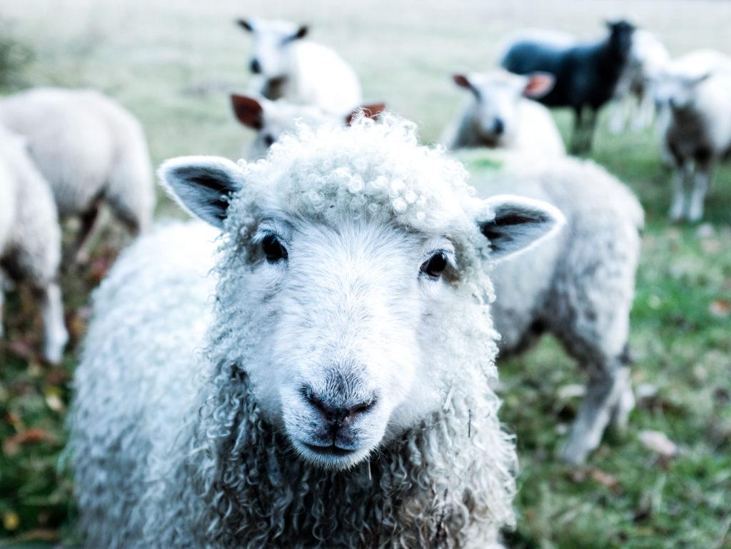 Nachhaltige-Ökologische-Wolle-Zertifikate
